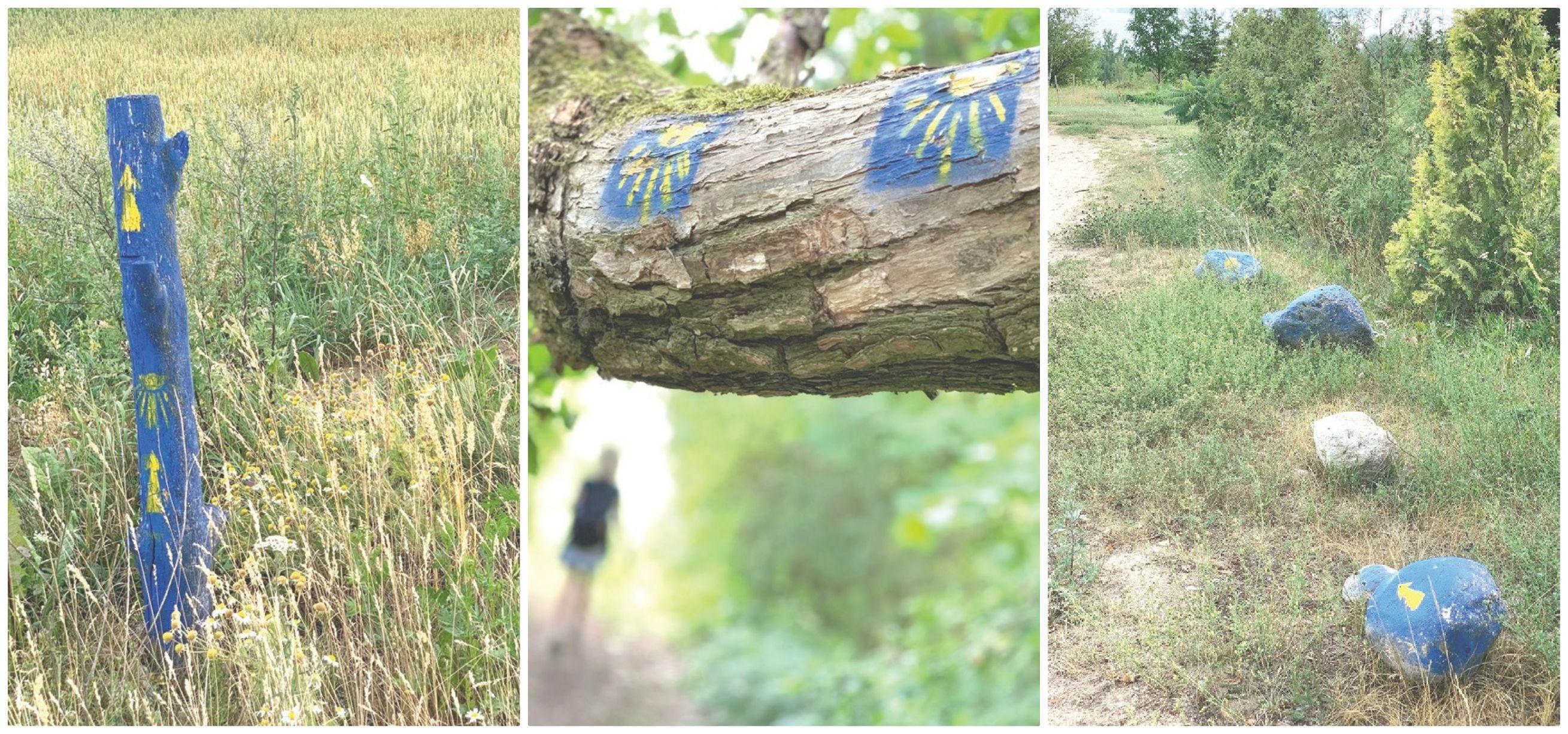 """""""Camino Lituano"""" keliai sužymėti specialiais simboliais – geltonos krypties rodyklėmis arba kriauklėmis. / Daivos Selickaitės nuotr."""