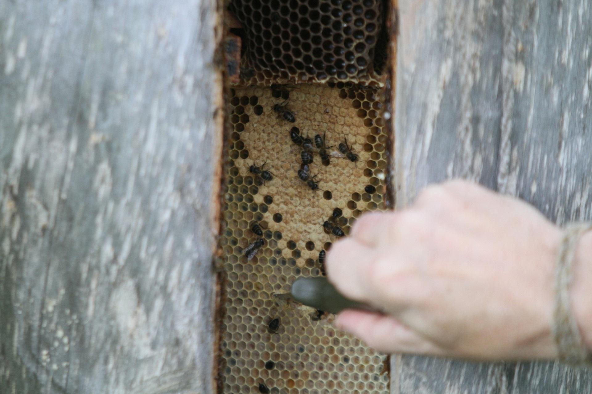 Žinoma, kiekvienas bitininkas savo darbo vaisių įkainoja skirtingai. Tačiau tokiems orams esant kaina neabejotinai ūgtelės. Juo labiau, kad pavasarinio medaus bus mažiau, nei, tarkime, buvo pernai. BNS (Alvydo Januševičiaus) nuotr.