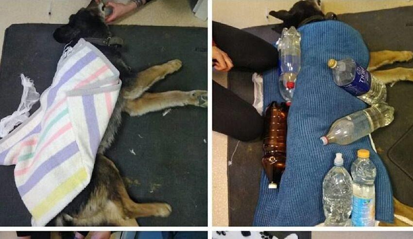 Pagalbos! Rastas beveik mirtinai sušalęs šuo