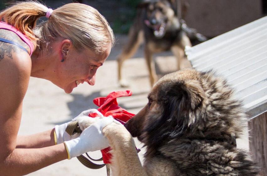 """Gyvūnų prieglaudos savanorė: """"Be šunų gyvenimo man nebūtų"""""""