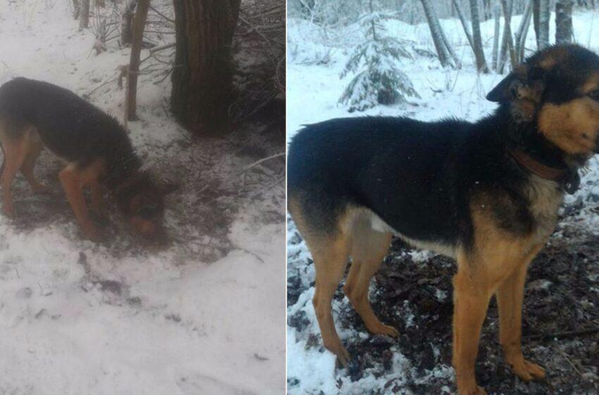 Geraširdis kėdainietis paliktam šuneliui suteikė antrą šansą (video reportažas)