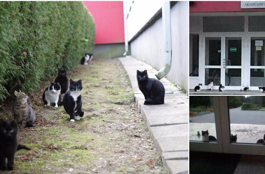 Prie gimnazijos gyvenančios katės ėda viena kitą?