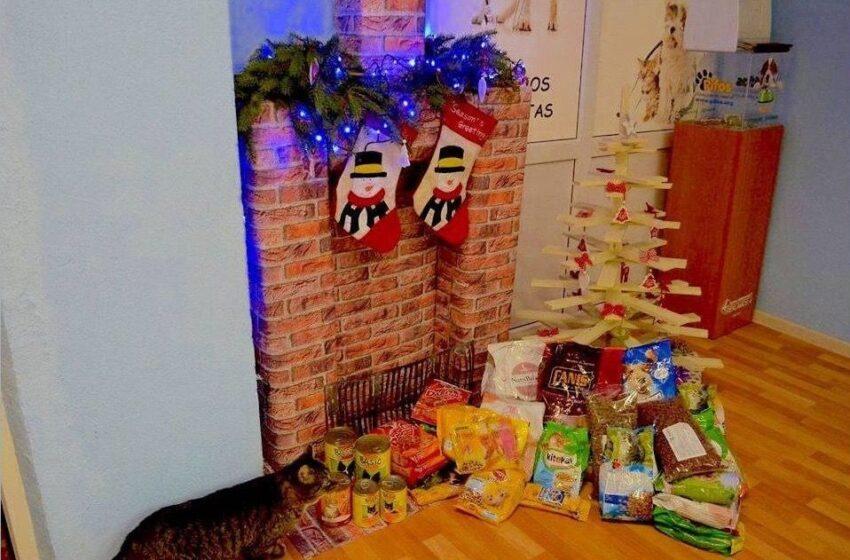 Padovanok Kalėdas beglobiams keturkojams