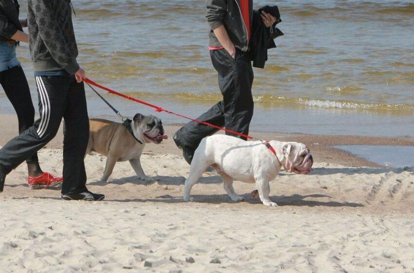 Leido paplūdimiuose poilsiauti kartu su gyvūnais
