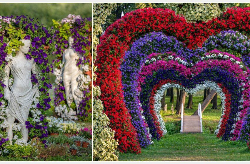 Didžiausiame gėlių festivalyje Europoje – Josvainiuose augintos gėlės