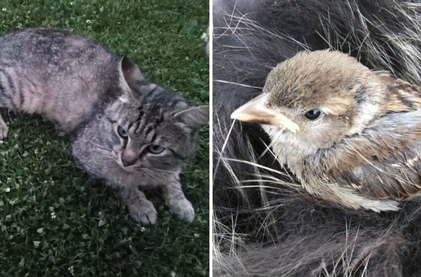 Išgelbėjo katino parneštą paukštelį