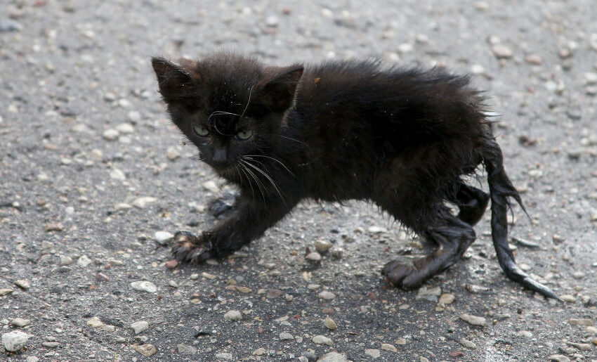 Nepaliko mirčiai: gelbėtojai iš šulinio ištraukė bejėgį kačiuką (foto, video)