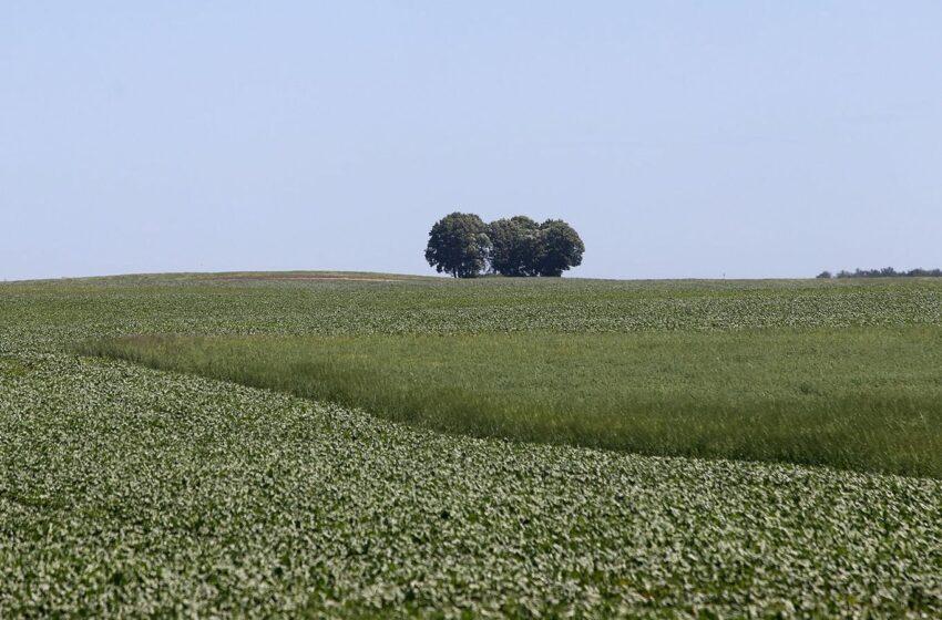 Kvedarų ūkyje – stambūs pokyčiai