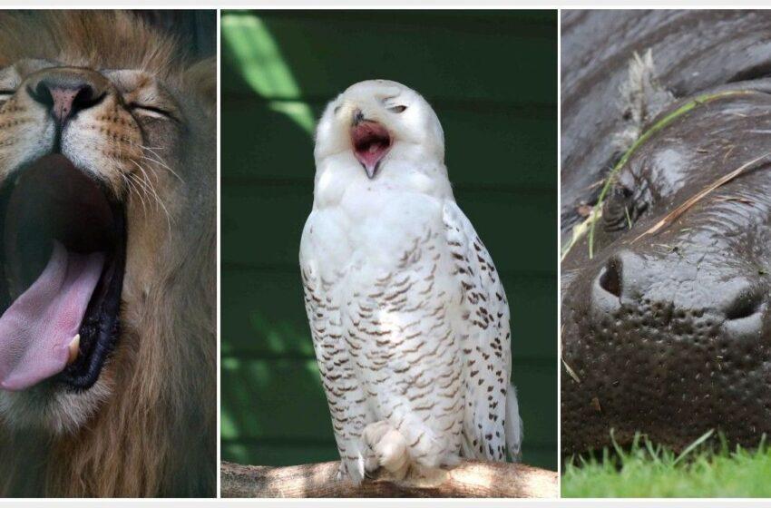 Gyvūnų karalystės miego laiko amplitudė plati: nuo 2 iki 16 valandų per parą