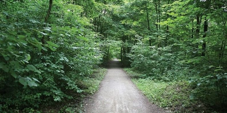 Prieš einant į mišką, reikėtų pasiskaityti taisykles