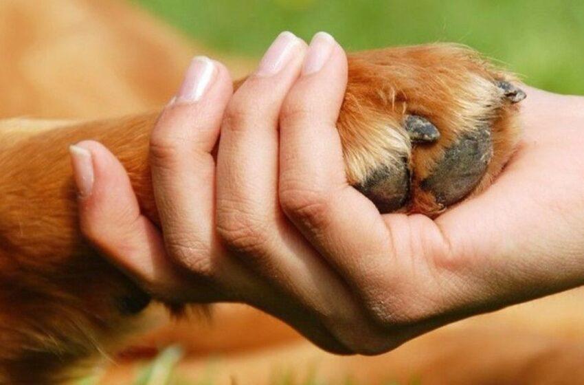 Esi neabejingas likimo nuskriaustiems gyvūnams? Tapk gyvūnų ambasadoriumi!