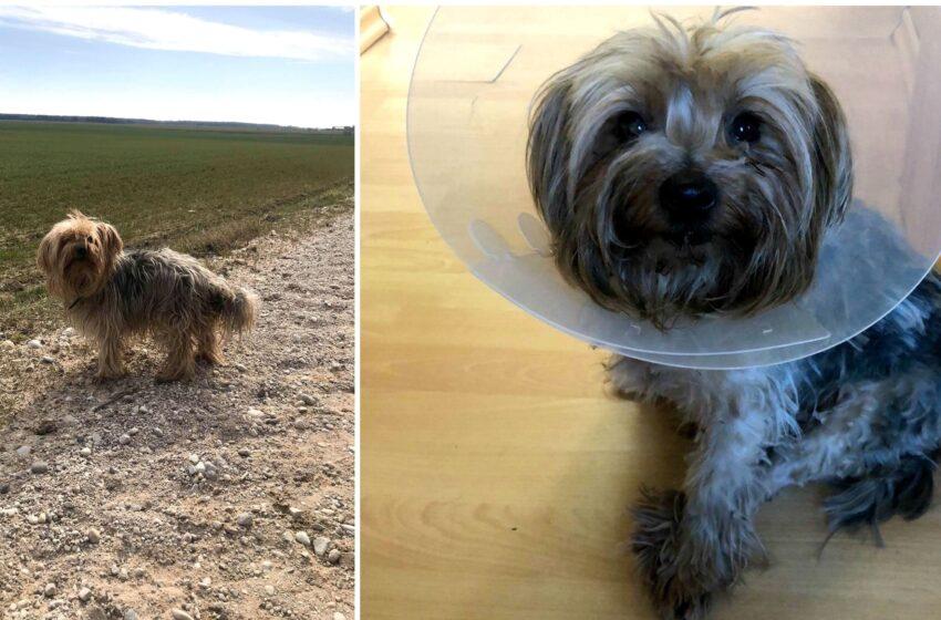 Gatvėje rastas išmestas šunelis tapo geriausiu šeimos draugu