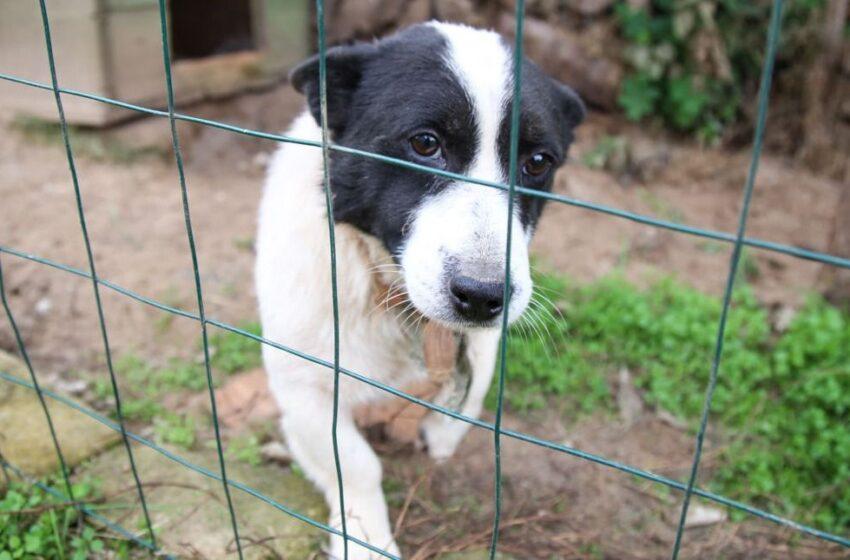 Už nenutylantį šunį – bauda