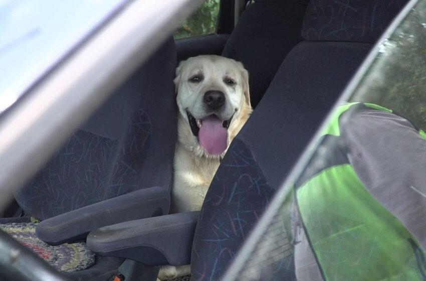 Boris: laimingai pasibaigusi šuns istorija