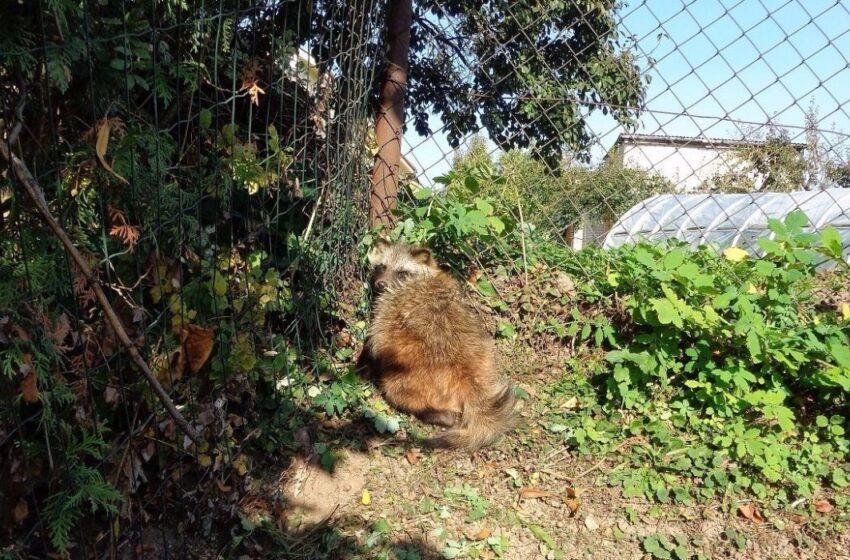 Ar verta žmogui baimintis miško žvėrių?