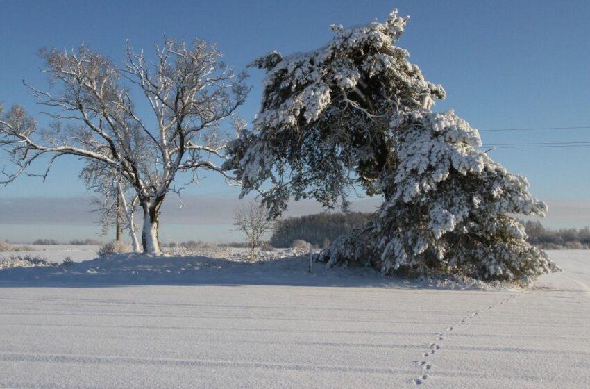 Žiemos grožis nuotraukose – ką reikėtų žinoti norint jį užfiksuoti išmaniuoju telefonu?
