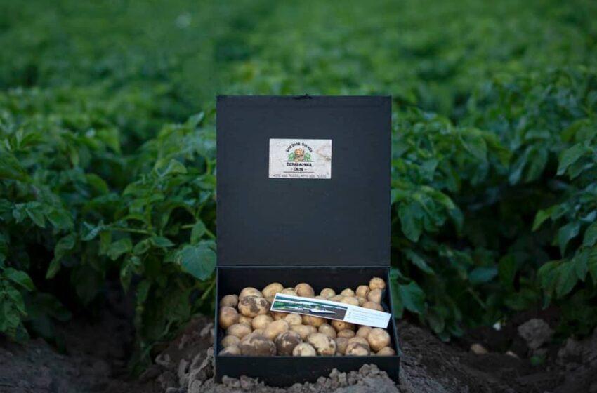 Pradėjo kasti pirmąsias bulves