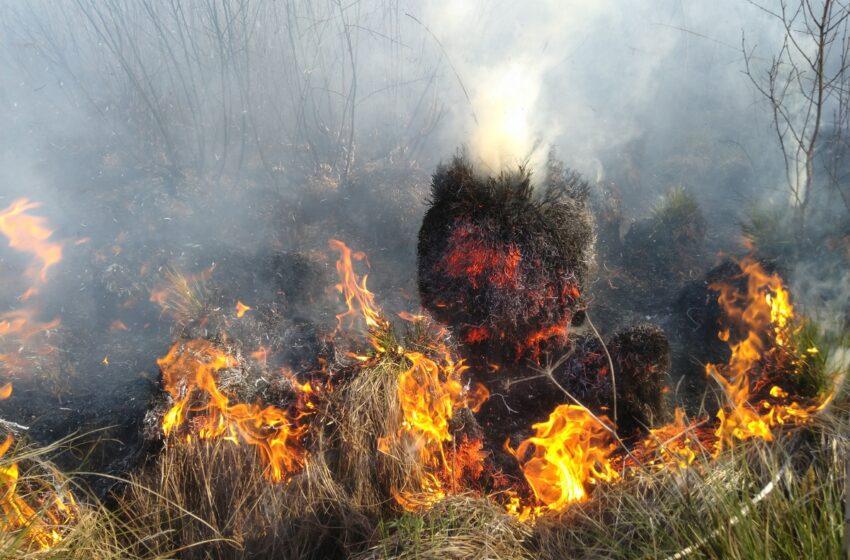 Miškininkai įspėja: įsivyravo IV klasės gaisringumas – Jonines švęskime atsargiai (VIDEO)