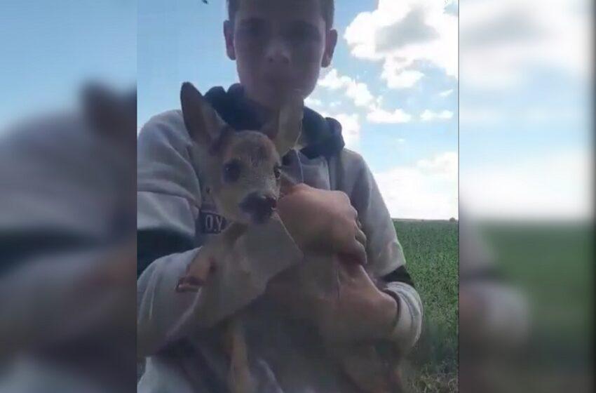Trylikametis gelbėjo į šulinį įkritusį stirniuką (VIDEO)