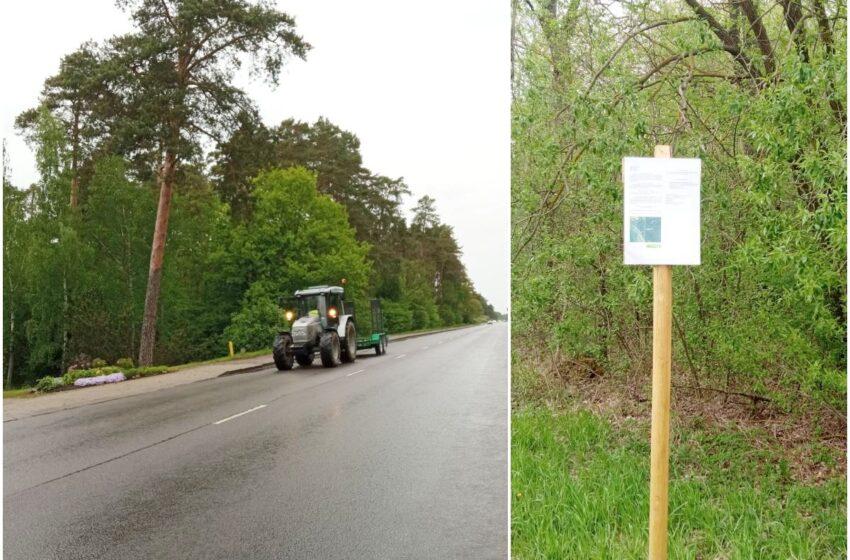 Babėnų šile šalinami šalia gatvės ir sodybų augantys pavojingi medžiai