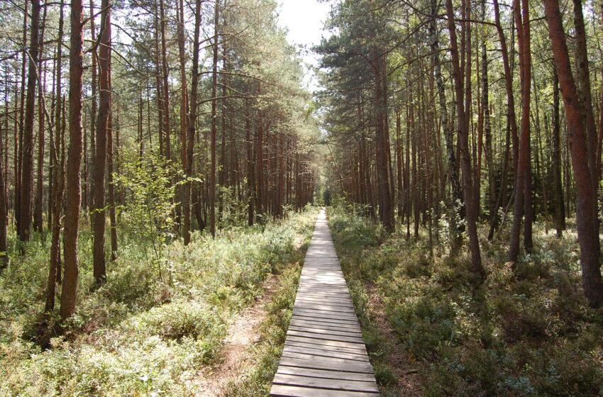 Valstybinių miškų urėdija pristatė Lietuvos rekreacinių objektų žemėlapį