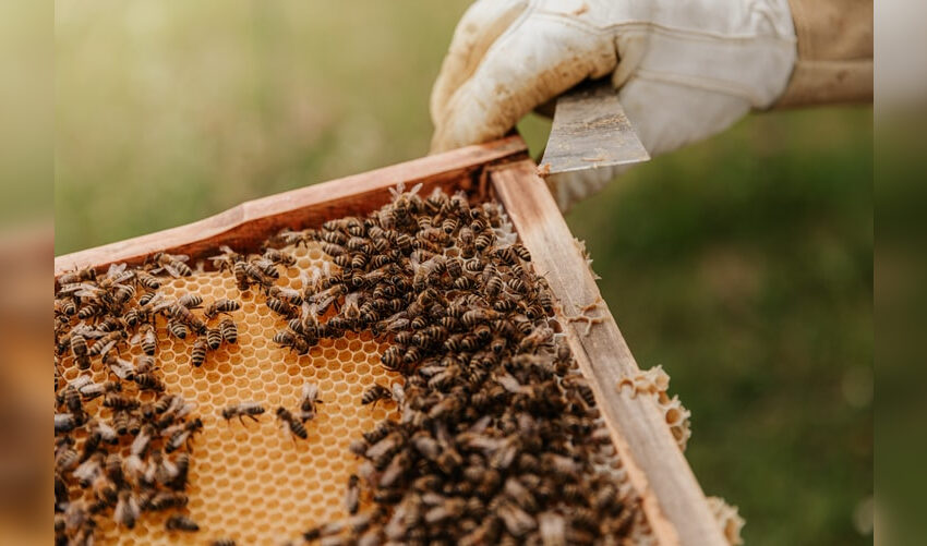 Bičių laikytojai gali kreiptis paramos už papildomą bičių maitinimą