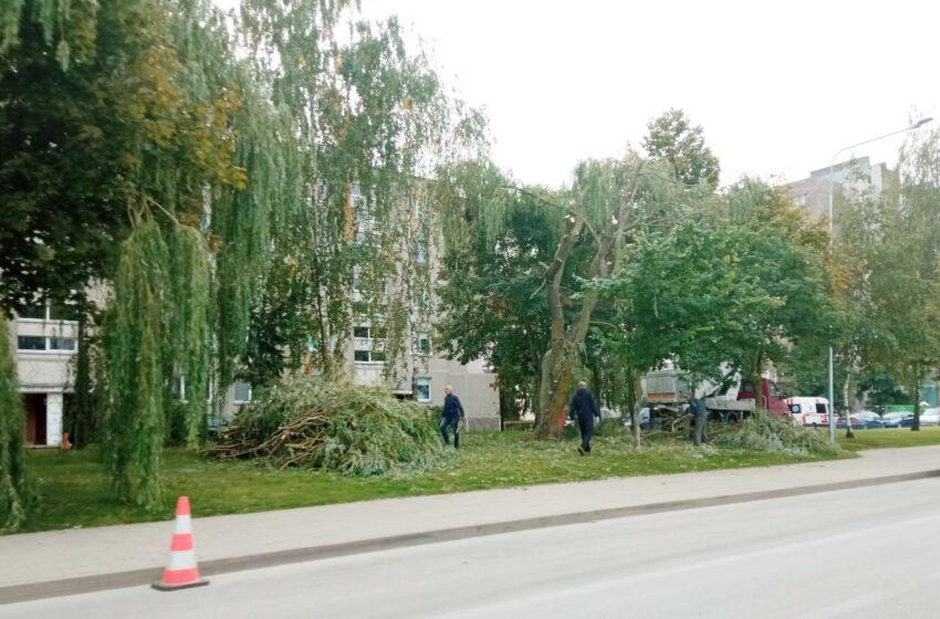 Respublikos gatvėje pjaunami medžiai supykdė gyventojus
