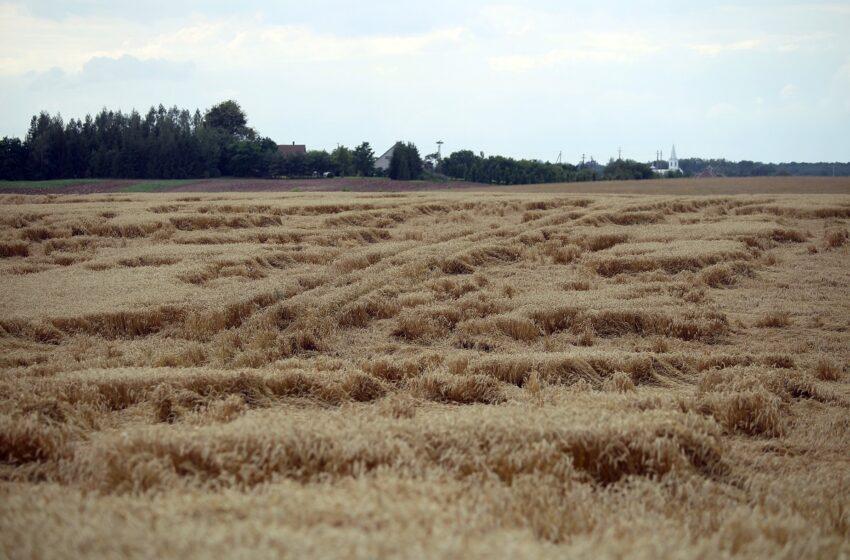 BTA draudimo bendrovės išmokos ūkininkams dėl patirtų nuostolių augo penkiskart