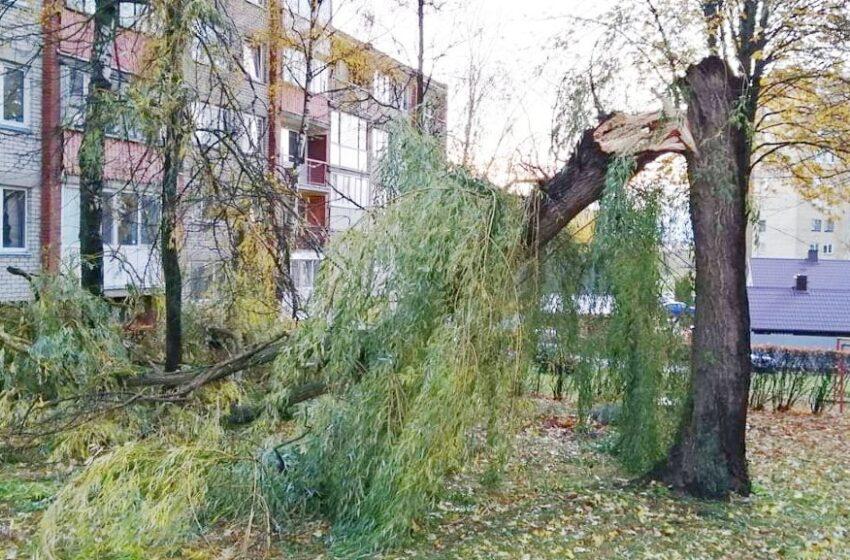 Vėjas vertė medžius, dalis kėdainiečių buvo likę be elektros